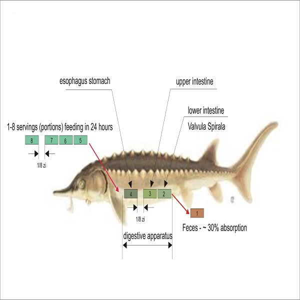 OLOOSON Adaptive Feeding System